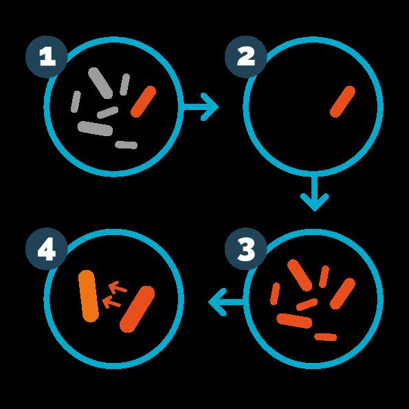 immagine vettoriale batteri